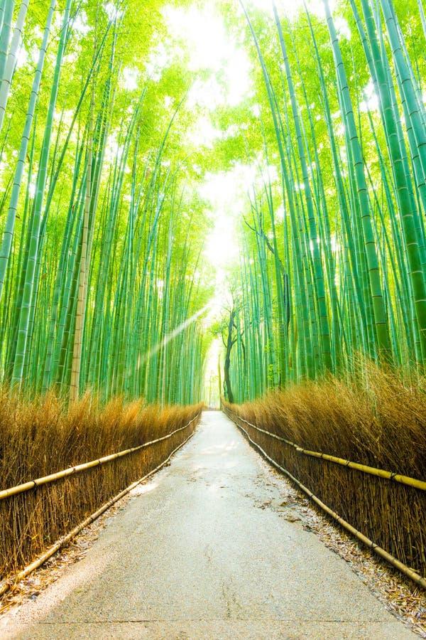 Road V van Forest Morning God Ray Straight van de bamboeboom stock afbeeldingen