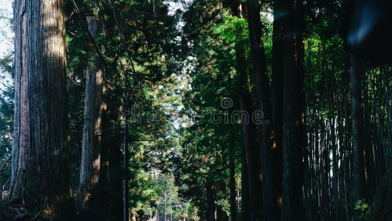 Road van Chiba hoogtepunt van boom stock afbeeldingen