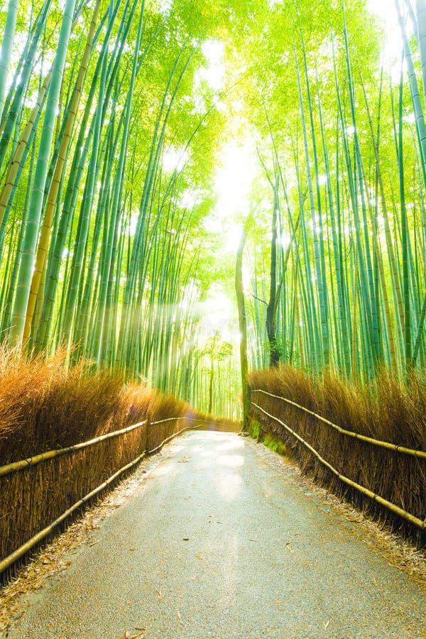 Road van Forest Sun Light Beams Empty van de bamboeboom royalty-vrije stock foto's