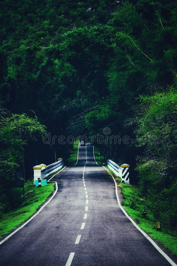 Road into wild royalty free stock images