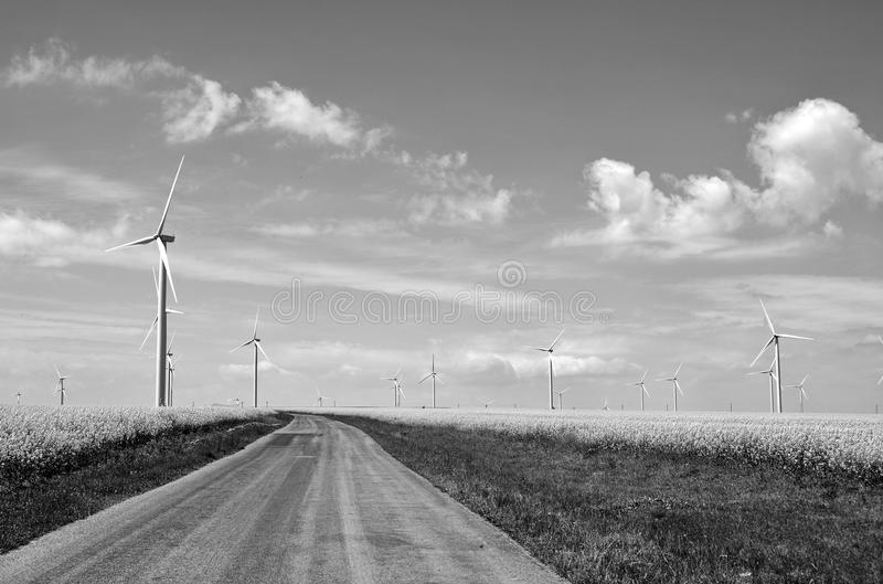 Road through Wind farm. Wind turbines in canola field - Alternative energy. Black and white view royalty free stock images