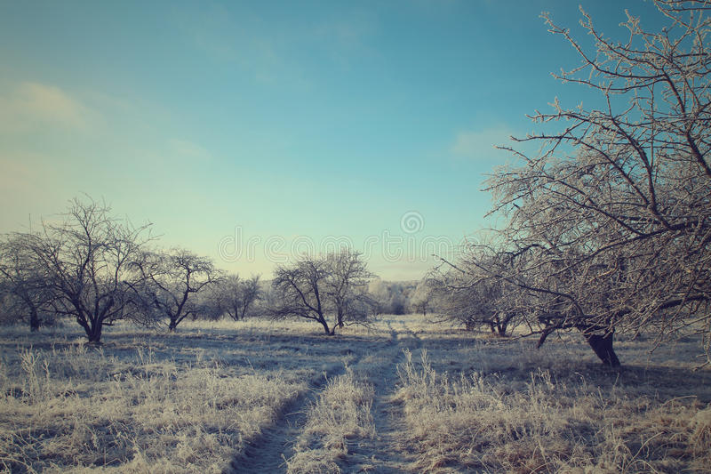 Road in the winter forest landscape. Soft toning royalty free stock photo