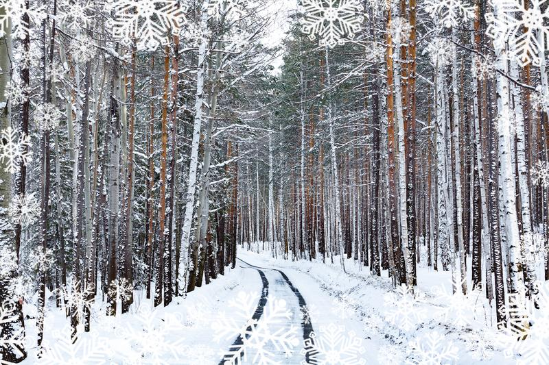 Road in winter forest. Snowcovered trees. Some snowflakes added stock photography