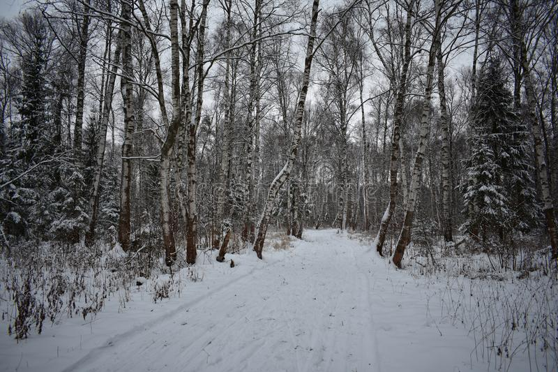 The road through the winter forest. A walk in the winter woods. Winter evening. In winter, the forest stands bewitched. Winter forest is beautiful royalty free stock photography