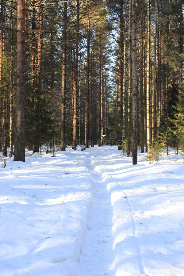 Road in winter forest in sunny day royalty free stock photo
