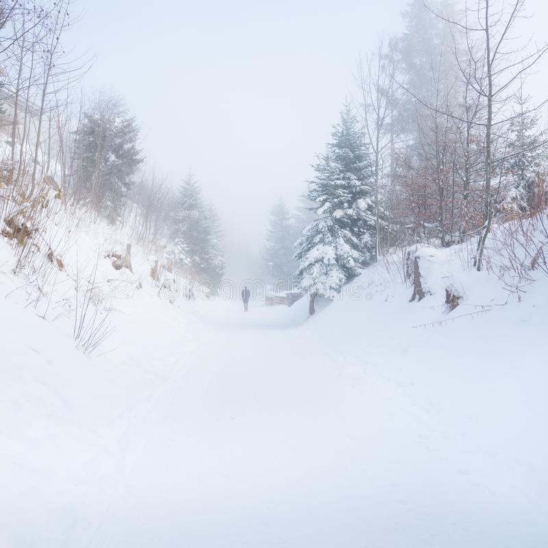 Walk in the winter foggy forest stock images