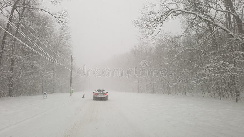 Winter storm in Ostratu forest royalty free stock photos