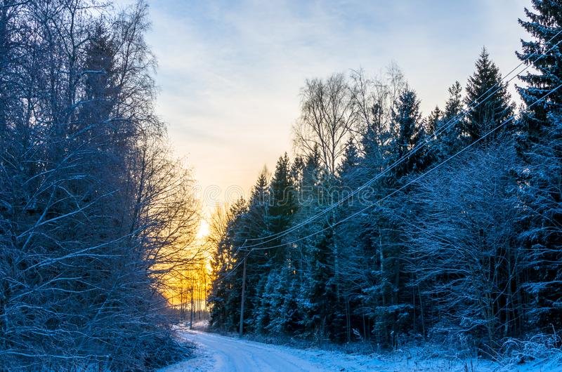 Road through a wintry forest at sunset in Estonia. Forestry and winter in Estonia. Forests cover about 50% of the territory of Estonia. Winter lasts from late royalty free stock photos