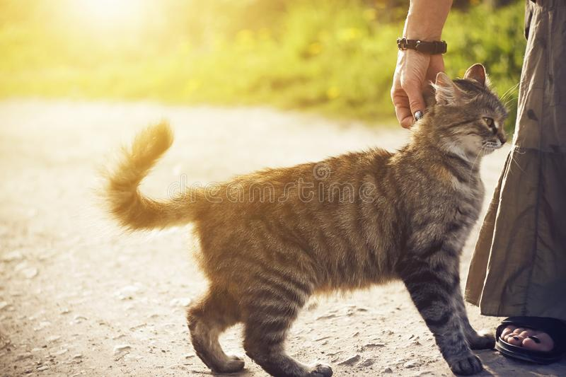 On a road a woman stroking a fluffy homeless cat royalty free stock photography