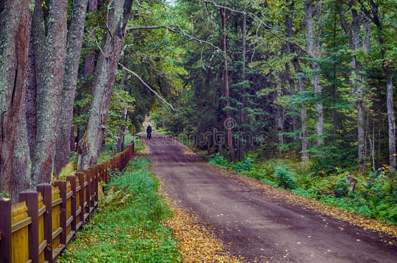 Road of wood stock photography