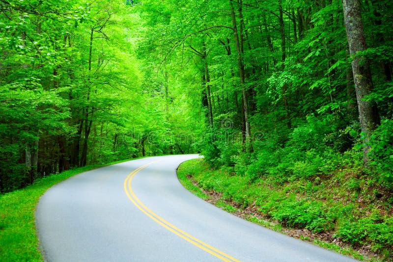 Road through the woods stock photos