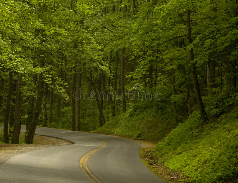 Road into the Woods stock photos