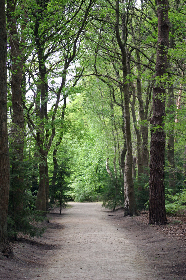 Road through the woods. A road through the woods shaded by tall trees stock photo