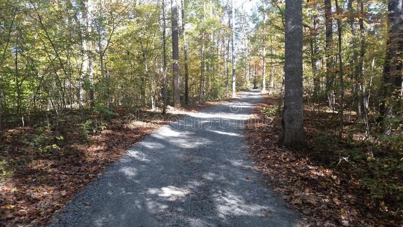 Road in the Woods royalty free stock image