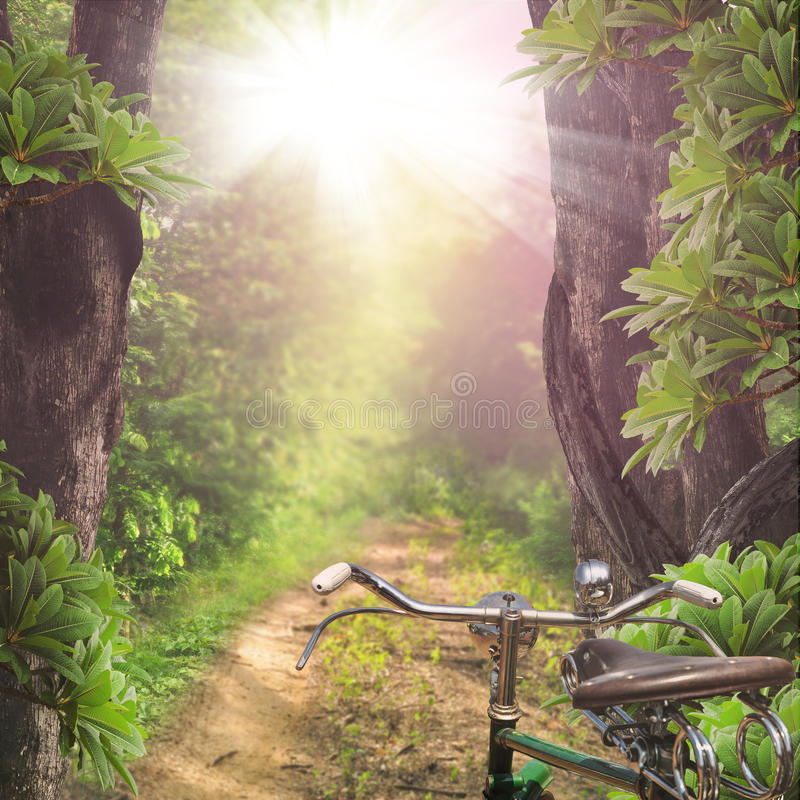 Road through the woods royalty free stock image