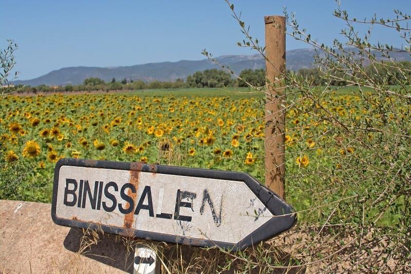 Roadpost de Binissalem de gisement de tournesol photo stock
