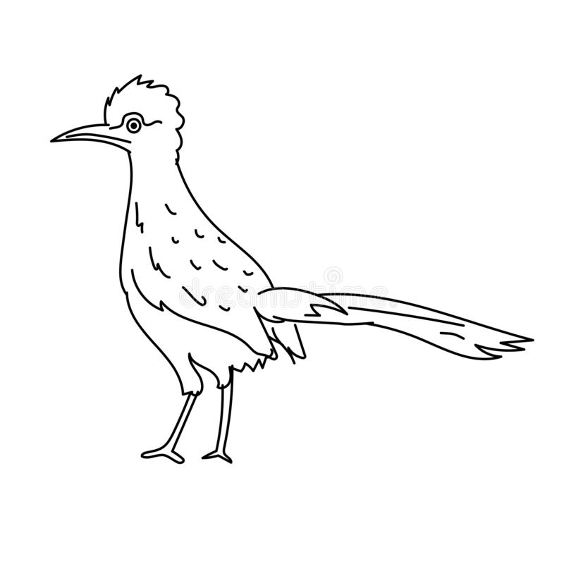 Roadrunner bird illustration vector.Line art bird. Roadrunner bird illustration vector isolated on white background vector illustration