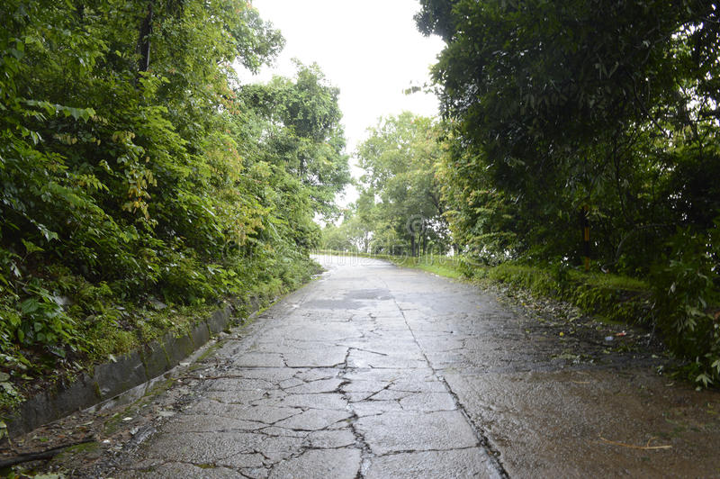 Roads protected by by green mother nature royalty free stock photo