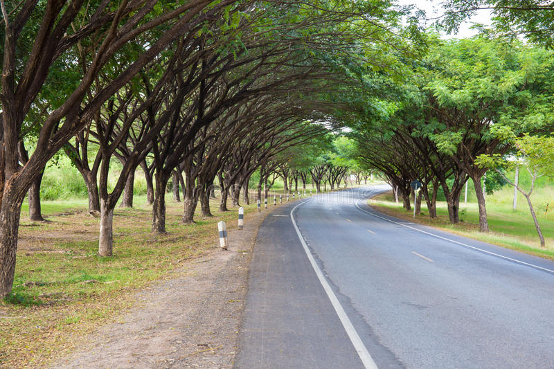 Roads with tree tunnel stock photography