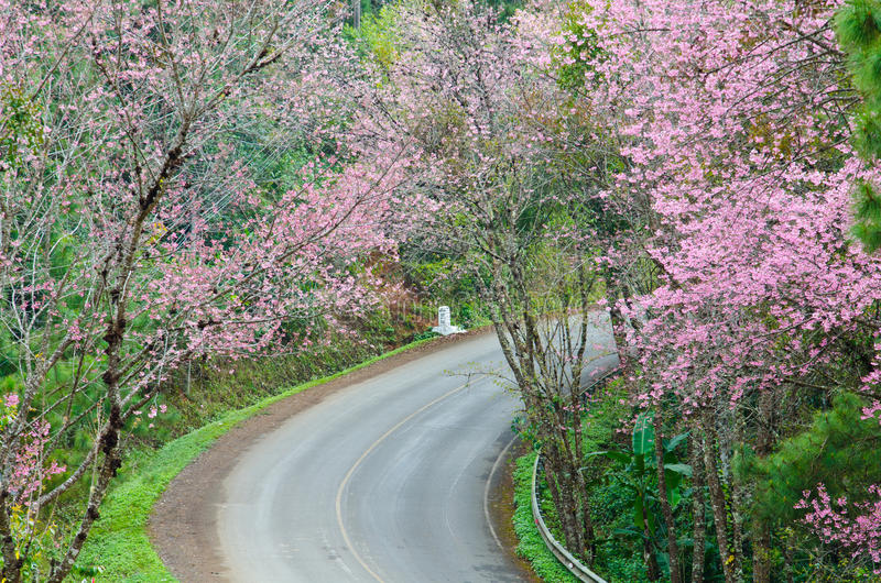 Roads in the valley. Rural roads in the mountainous north of Thailand stock photography