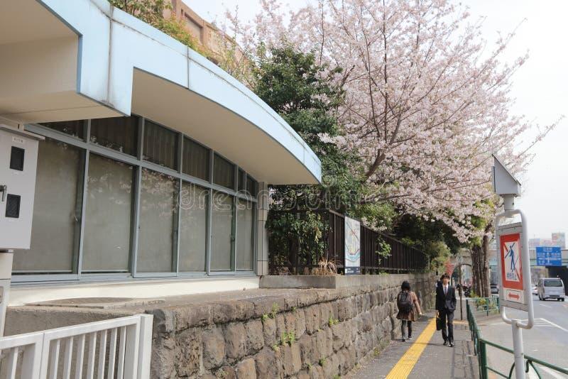 Roadside Cherry Blossom trees. The Roadside Cherry Blossom trees at 2016 stock photo