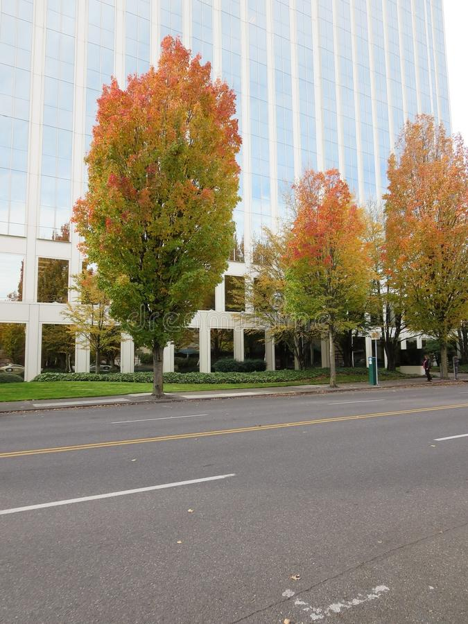 Roadside fall trees. Colorful trees of fall in downtown portland in front of lloyd centre mall royalty free stock photography