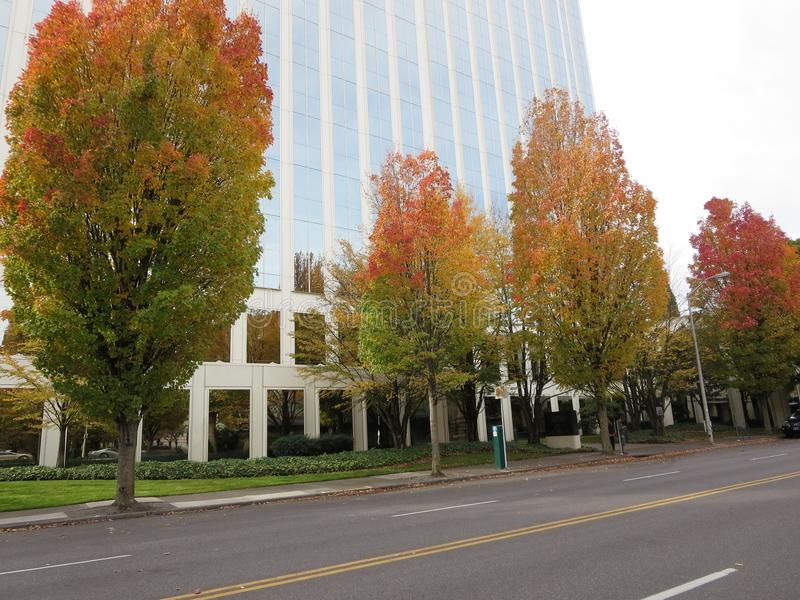 Roadside fall trees. Colorful trees of fall in downtown portland in front of lloyd centre mall royalty free stock photos