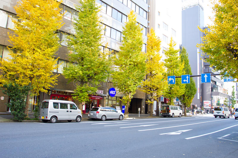 Roadside ginkgo trees in Tokyo, Japan. TOKYO, JAPAN - DEC 6: Roadside ginkgo trees in Tokyo, Japan on December 6, 2015. Tokyo is both the capital and largest royalty free stock photo