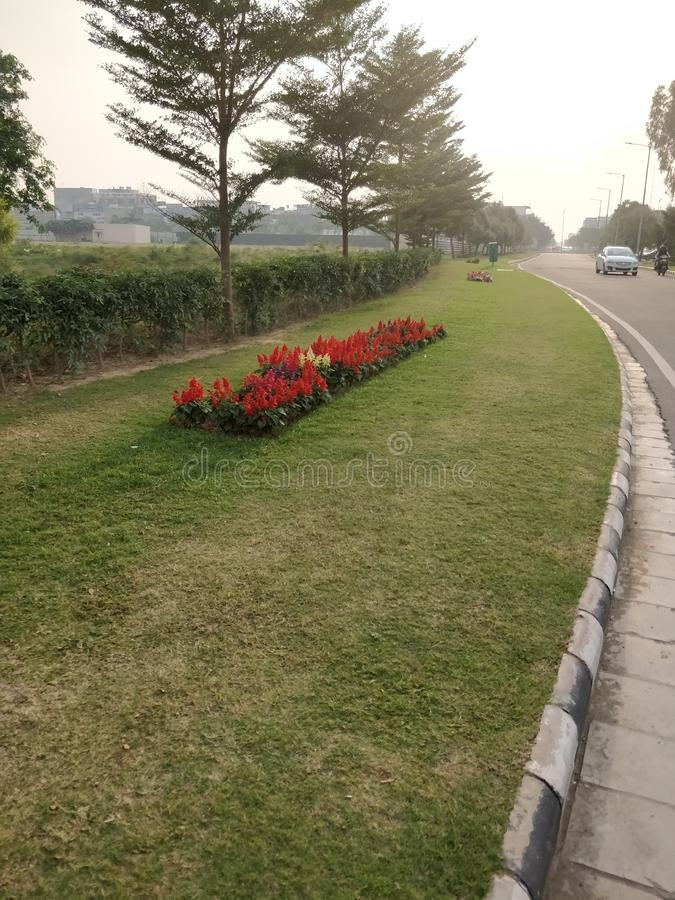 Roadside lawn with red salvia flower bed stock image