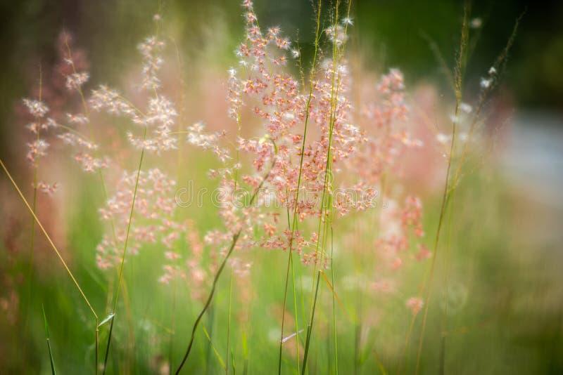 Roadside-roze bloemen stock afbeeldingen