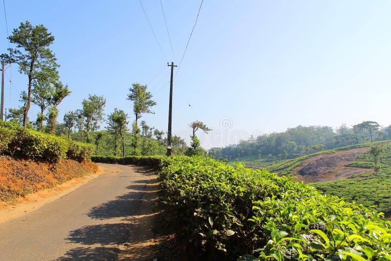 Roadside Tea Estate royalty free stock photos