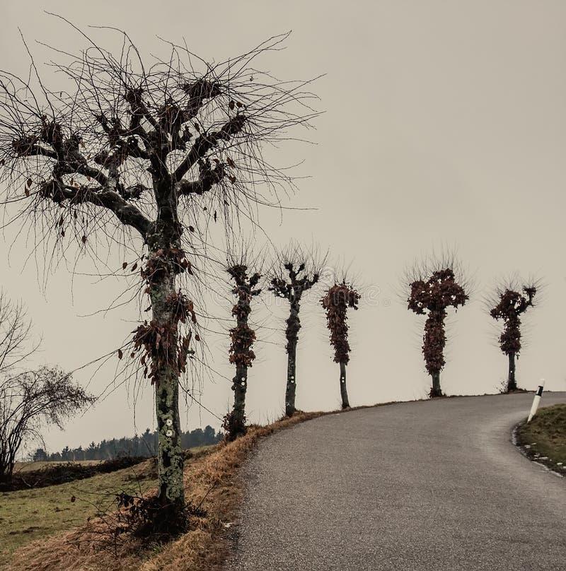 Roadside Trees on a Curve. Stark bare trees alongside a roadside curve royalty free stock photography