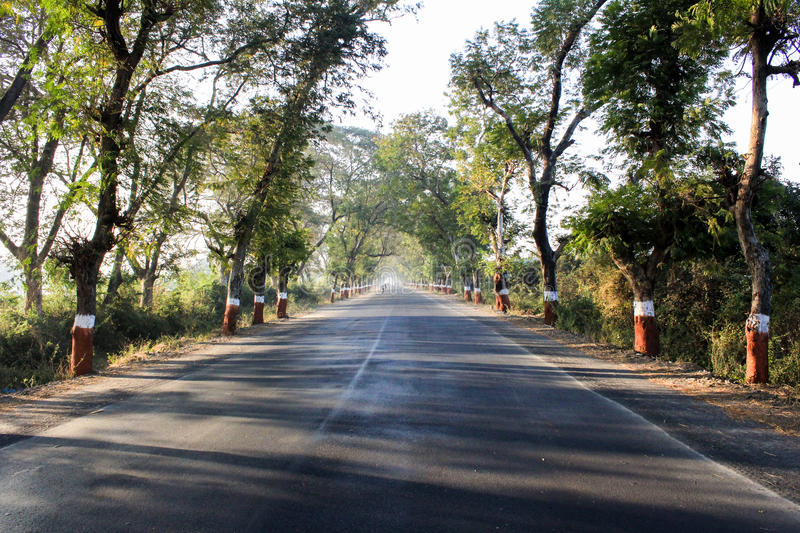 Roadside trees in India. Are colored. This picture was taken in the winter morning near Khambhat , Gujarat , India royalty free stock photo