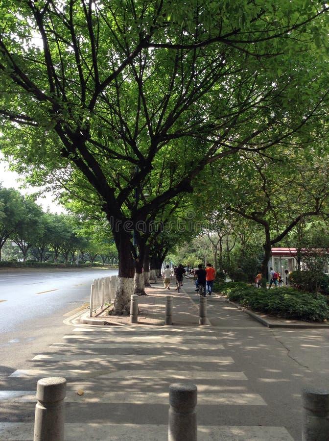 Roadside trees landscape in the city. Tree shady street in Guangzhou stock image