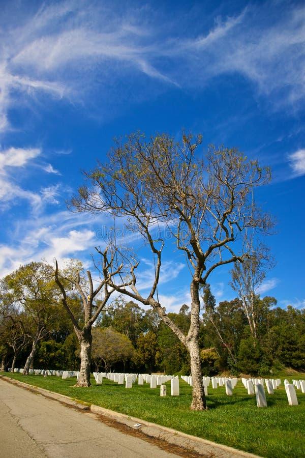 Roadside Trees In Memorial Cemetery Stock Photo