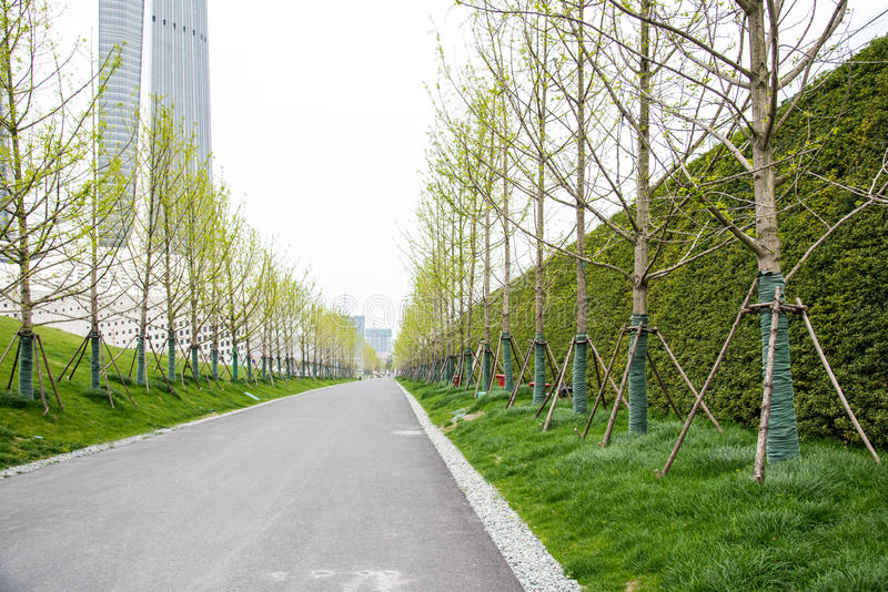 Roadside trees. This photo was taken in The culture of the Youth Olympic Sports Park,Nanjing city,china.The photo was taken as 2015.4.16 stock image