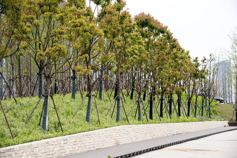 Roadside trees. This photo was taken in The culture of the Youth Olympic Sports Park,Nanjing city,china.The photo was taken as 2015.4.16 stock photography
