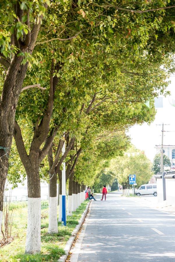 Roadside trees. This photo was taken in Suoshi Village,Nanjing city,china.The photo was taken as 2015.4.21 royalty free stock photo