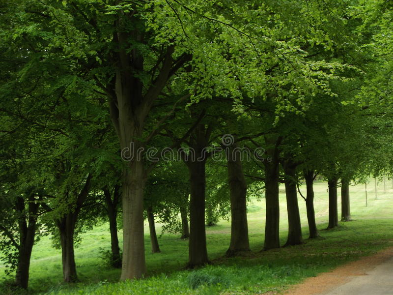 Roadside Trees. Trees Beside A Road stock images