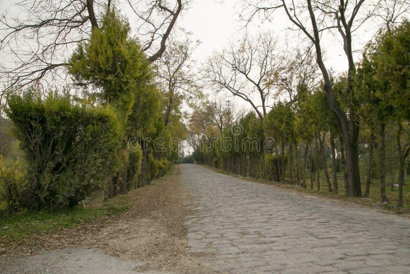 Roadside trees in stony. Autumn stock photos