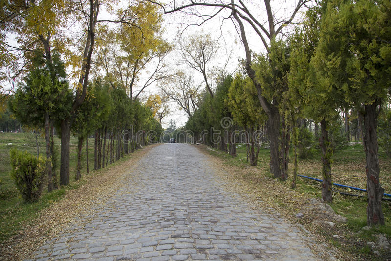 Roadside trees in stony. Autumn stock photography