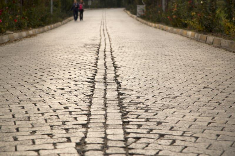 Roadside trees in stony. Autumn royalty free stock image