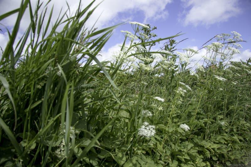 Roadside weed stock photography
