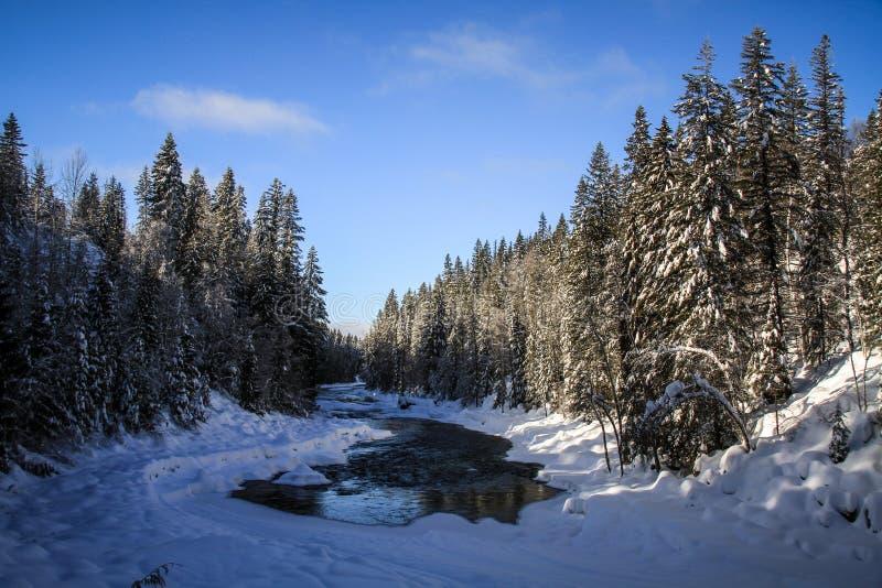 Roadtripping nelle montagne rocciose majestuous fra il diaspro ed Alberta su Alberta Highway 93, Alberta, Canada fotografia stock libera da diritti