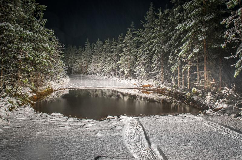 Roadway Filled by Snow Surrounded by Pine Trees Landscape Photography royalty free stock images
