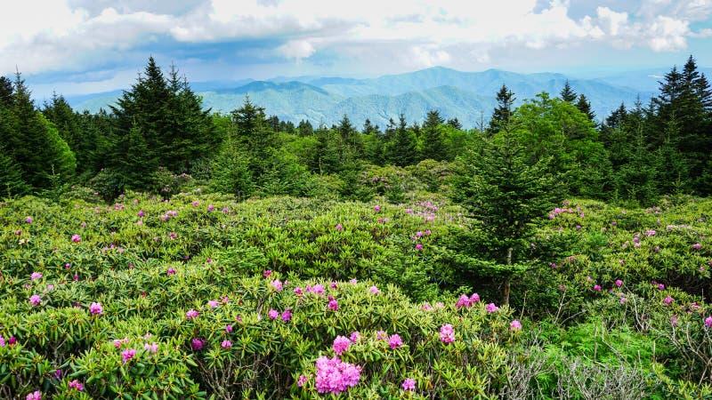 Roan Mountain State Park North Carolina royaltyfria bilder