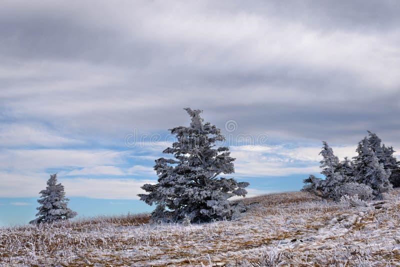 Roan Mountain Winter Hike 4 royaltyfri foto