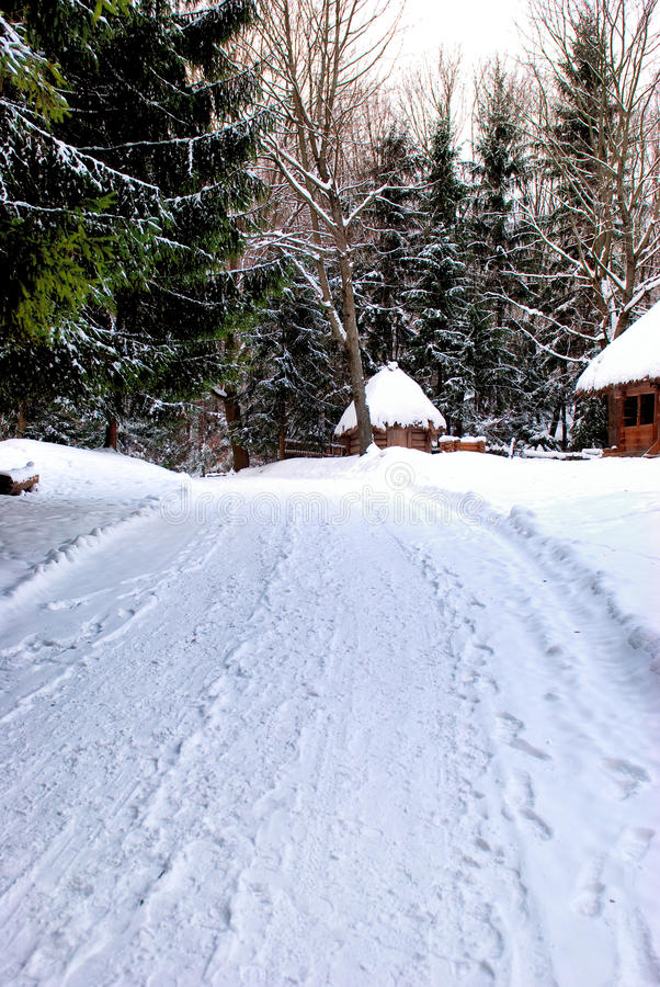 Roand del invierno en el bosque foto de archivo libre de regalías