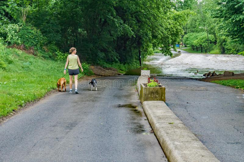 Women and Dogs Checking on the Rising Waters of the Roanoke River. Roanoke, VA – May 18th, 2018; Woman walking her dogs checking on the rising flood stock image