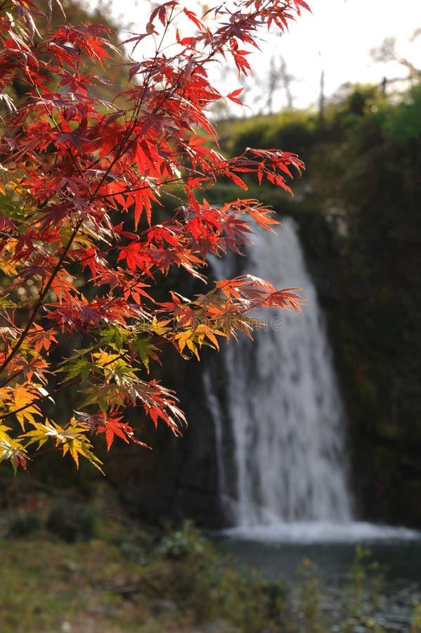 Roar of Falls Park Spot Japan. Autumn of Falls Park Spot Japan stock image